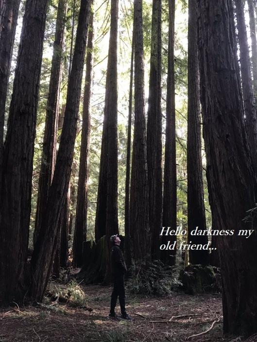 comey-woods-2.jpg